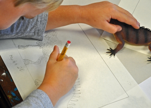 """Students are encouraged to feel the animal replica (I don't say, 'toy"""")to help them record the texture."""