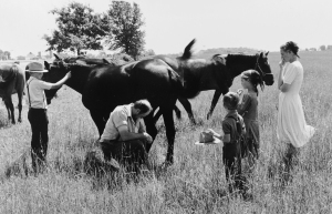 A family checks on a horse in the field.